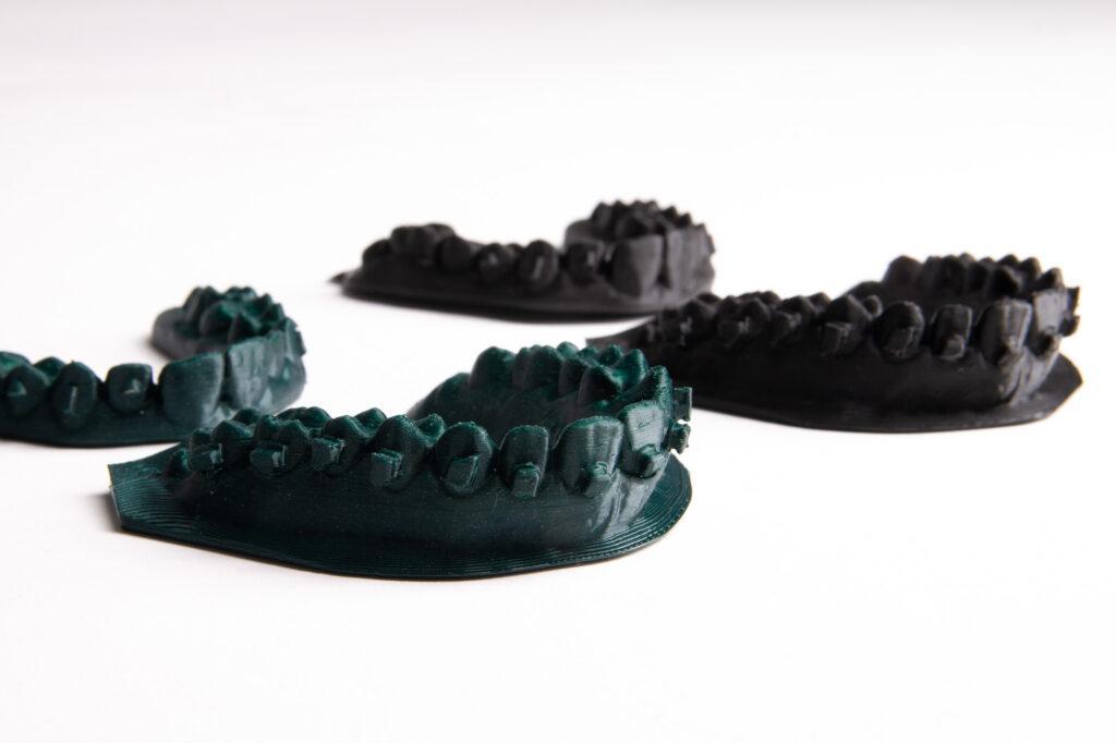 PLA medical models - teeth